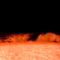 """Protuberanzen-Gruppe am SSW-Rand -- Zur Abwechslung ;-) wieder Mal etwas vom Sonnenrand.  LZOS 6"""" f8 Apo, Baader D-ERF 160, TV 4x Powermate, SolarSpectrum 0.3 À, ASI290mm. Beste Grüsse aus der Schweiz, Jozef"""